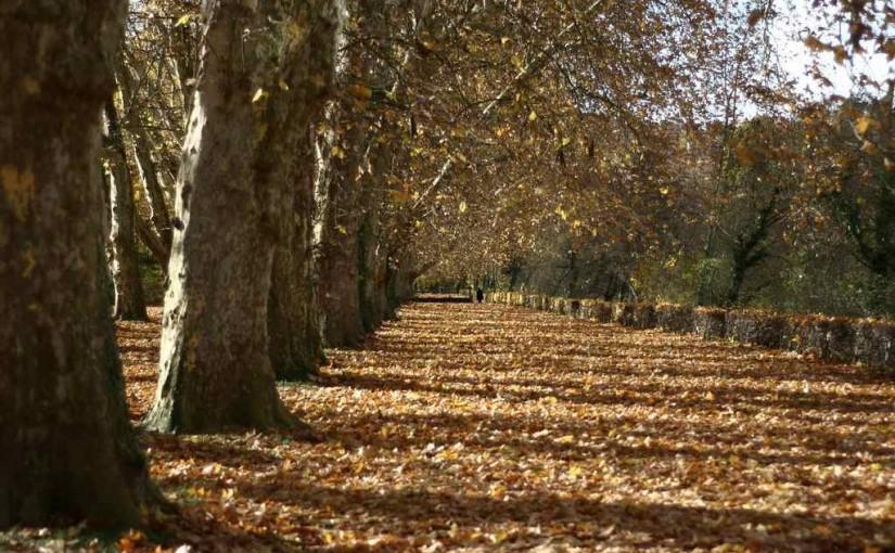 Herbst (Die Blätter fallen)