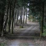 Idyllischer Waldweg, der allerdings vor allem im Spätsommer mit sehr penetranten Bremsen aufwarten kann.