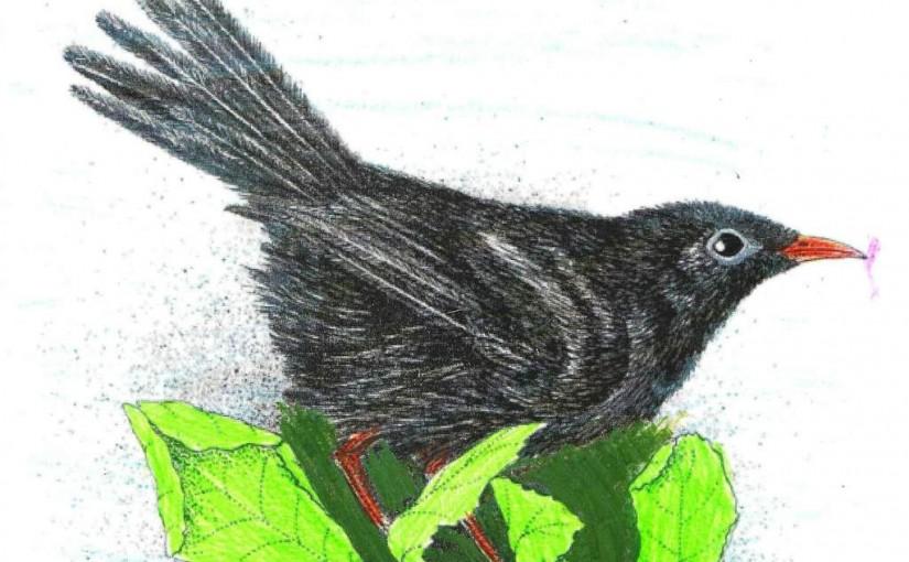 Amsel der Vogelhochzeit