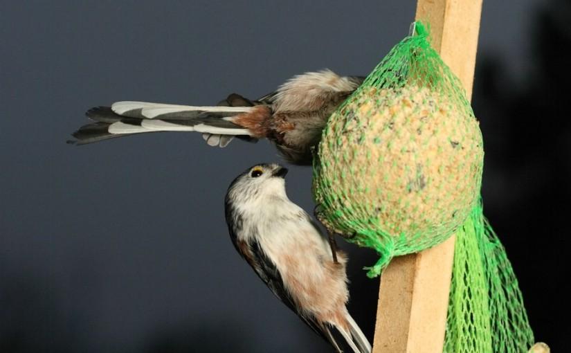 Vögel füttern!