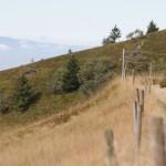 Wanderwege auf dem Belchen mit Blick auf die Vogesen