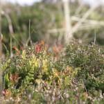 Vegetation auf dem Belchen
