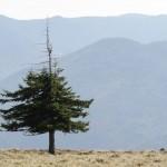 Gerodeter Gipfel, einsame Trotzköpfe