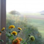 Feldblumen vor Wisoch