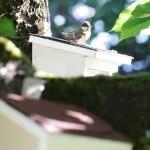 Auf Nachbars Dach