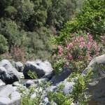 Alcantara-Schlucht